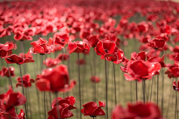 888246-ceramic-poppies-tower-of-london-remembrance-day-designboom-12