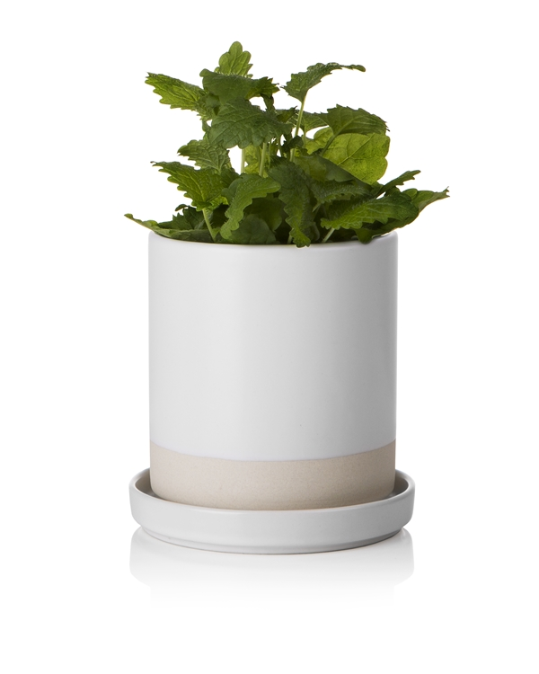 Spice herb pot and plate small 11x9/10,5cm