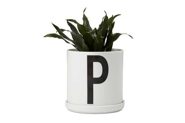 Plant Pot with plant