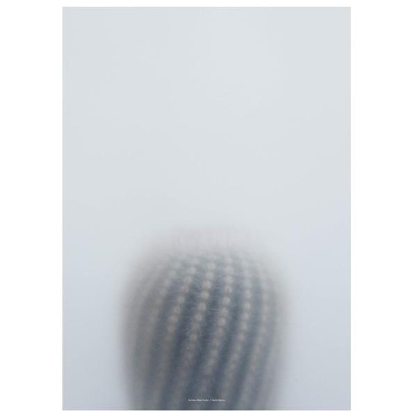 kristina-dam-botanik-poster-ball-cactus