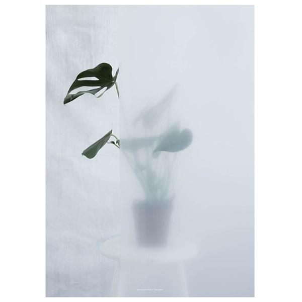kristina-dam-split-leaf