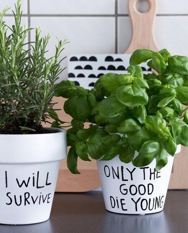 plante-cuisine-message-pot-drole