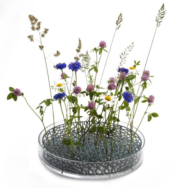 ÄNG_mega__blommor