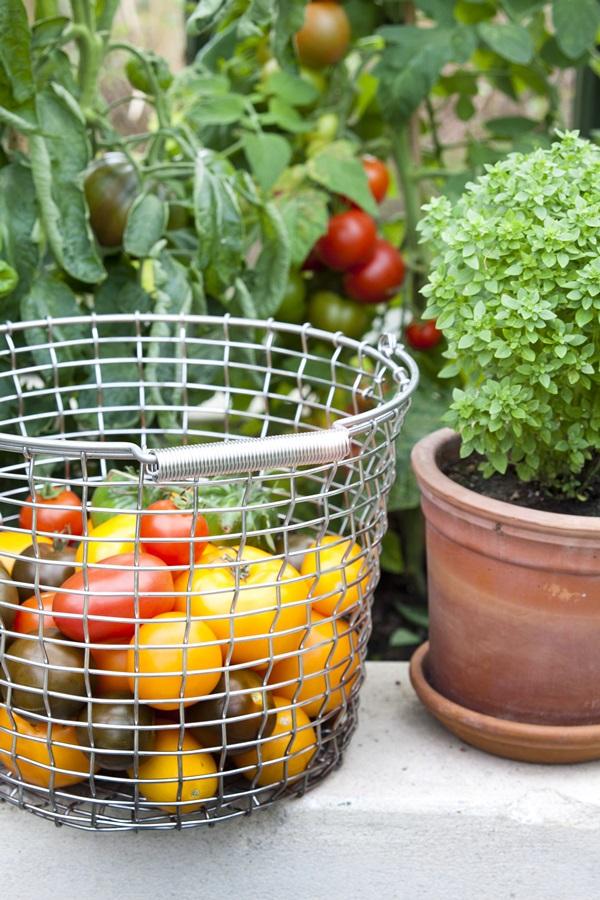 Bucket 16 - Tomatoes