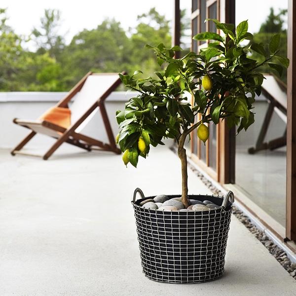 Classic 24, planting bag - Lemon tree (square)