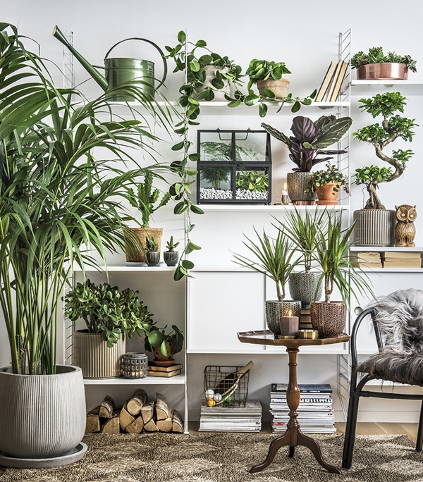 plantagen-indoor2016-hyllor-16