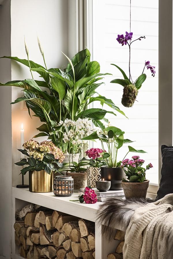 plantagen-indoor2016-vedfofonser
