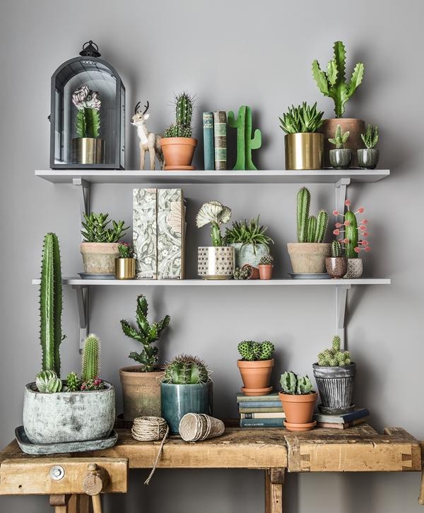 plantagen-apr16-kaktusar-011_besk