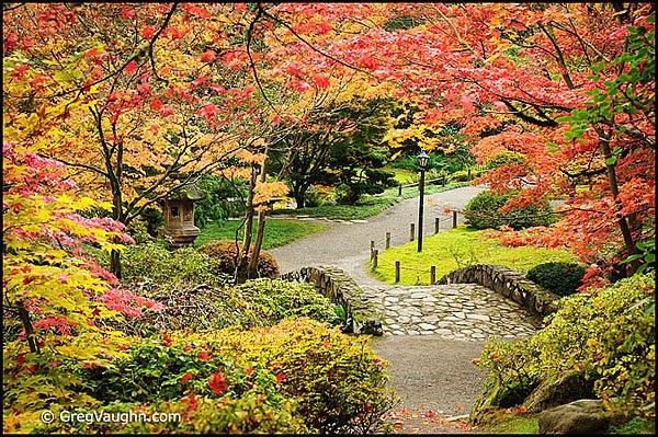 11110218_seattle-japanese-garden