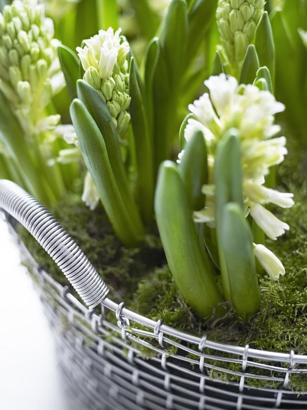 classic-35-flowers-closeup