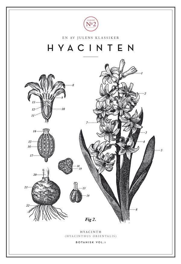 AG_julkort_hyacint