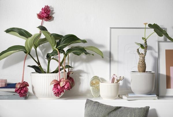 Hammerhøi Flowerpots SS18_1