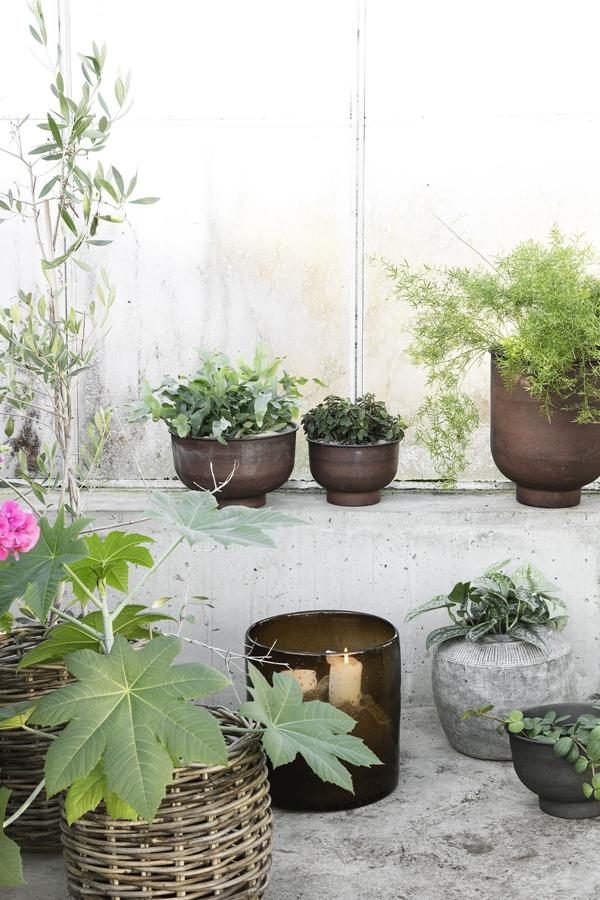 hd_ss18_greenhouse17_ch
