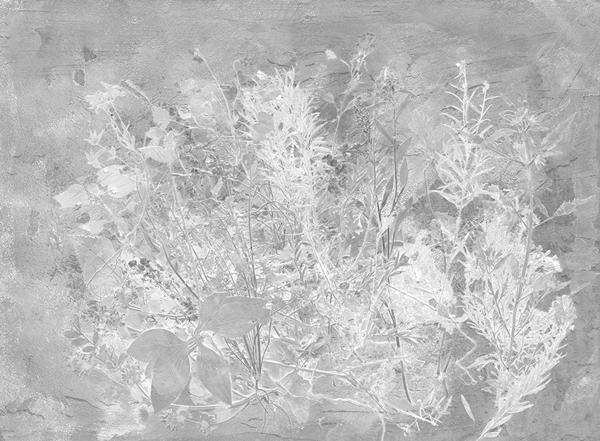 FloraHysterica1