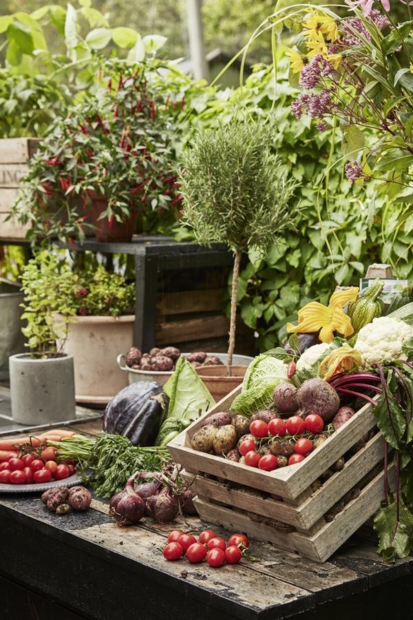 GYO_Allotment_harvest_veg_herbs