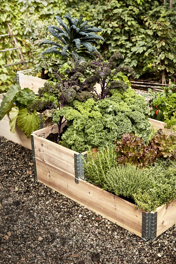 GYO_Allotment_palletcollers_nature_herbs_rubarb_cabbage_herbs