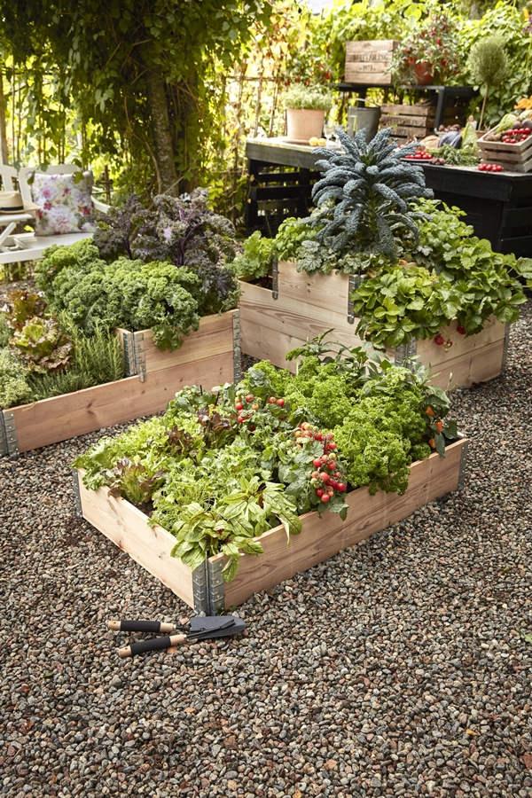 GYO_Allotment_palletcollers_nature_herbs_strawberries_cabbage_port