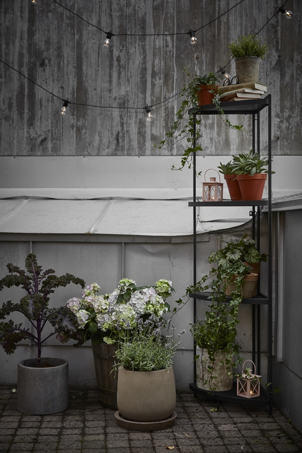 GYO_Tilia_cornershelf_high_cabbage_hydrangea_herb_evening