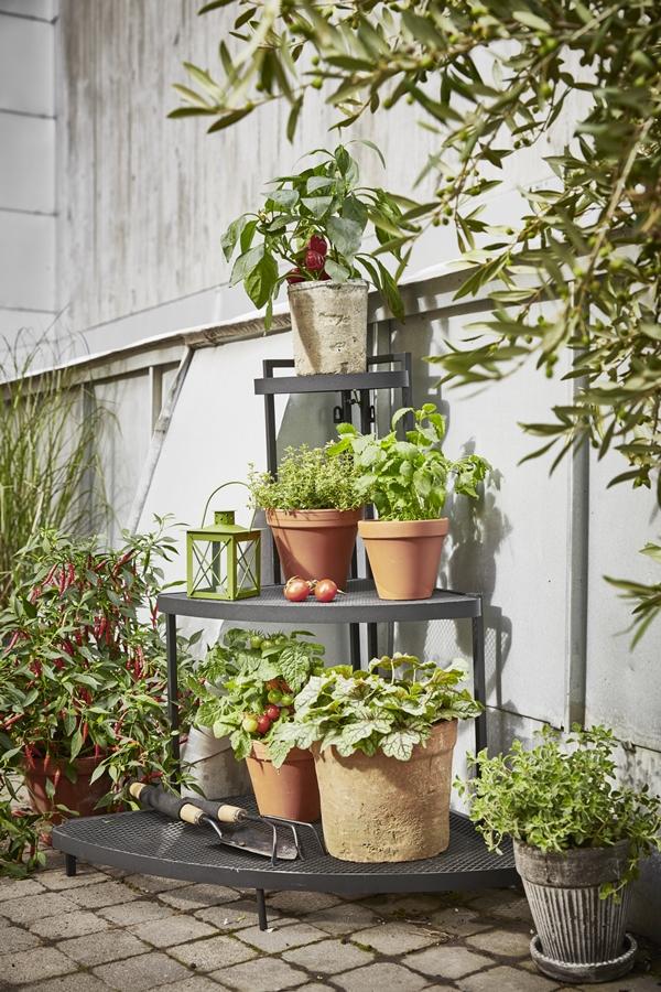 GYO_Tilia_cornershelf_low_herbs_chili