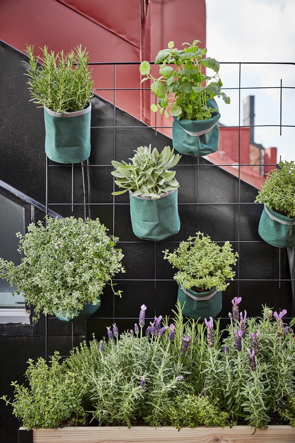 GYO_balcony_Cultura_spaje_herbs